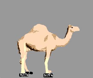 Camel has cameltoe