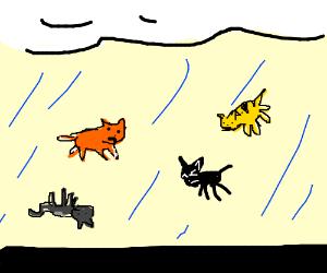 IT'S RAINING CATS!