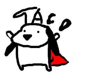 Taco the Wonder Dog
