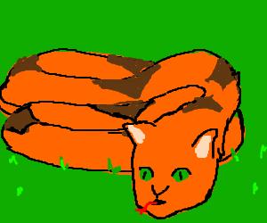 Mixed breed cat.