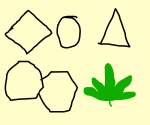 Shapes are geometrical because of weed