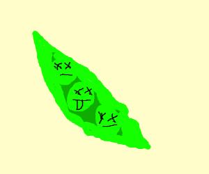 Dead peas in pod