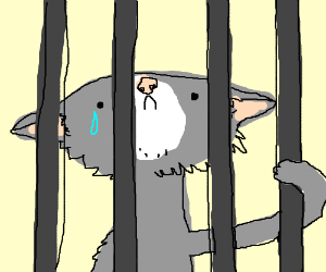 Sad cats in jail