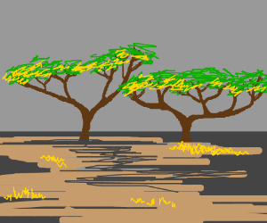 Two Acacia trees during fall