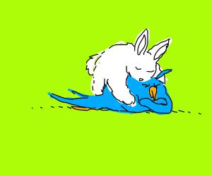 Rabbit hugging a hug-hating bird