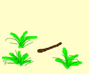 a planarian flatworm