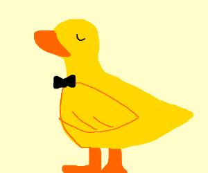 dominant duck