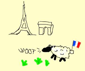 french sheep barking