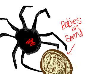 Desert spider pulling egg sac