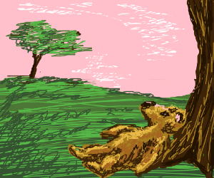 Bear laying in the grass watching the sky