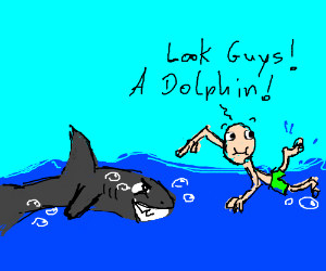 Brave swimmers think shark is a dolphin