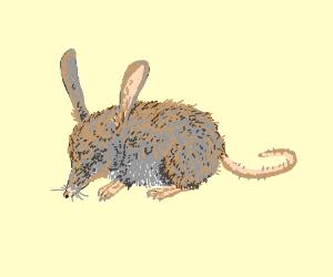 Rabbit-shrew hybrid