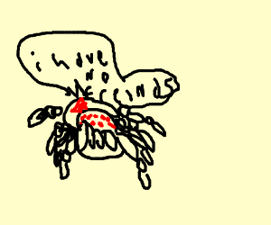 a lonely spider