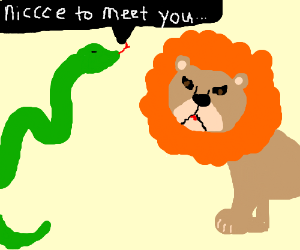 Snake meets (male) lion
