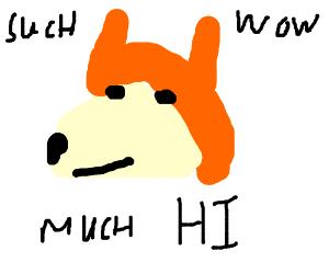 doge says hi