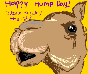 Happy Hump Day from Mr. Camel