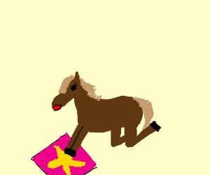 small horse has hoof-star