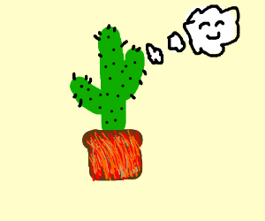 A happy cactus in a planter