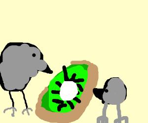 a kiwi and his pet kiwi eating kiwifruit