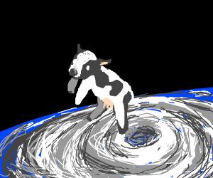 hurricane got a cow