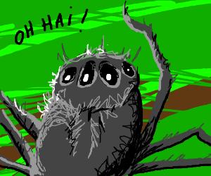 A spider up close