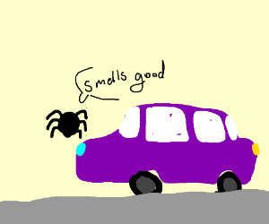 flying spider thinks purple car smells good