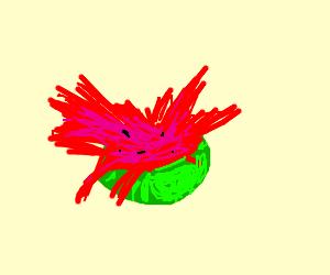 Watermelonsplosion