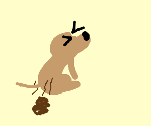 A dog pooping