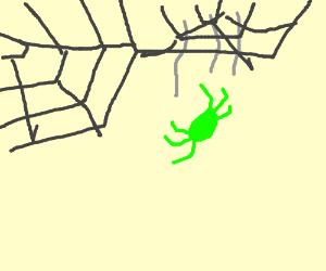 Green spider falls off web