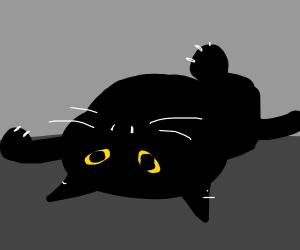 An upside-down cat