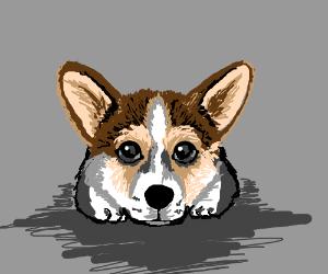 A cute corgi - Drawception