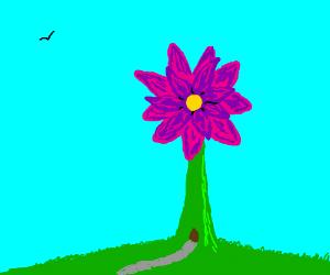 Blooming Flower Windmill