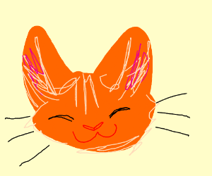 A cat with kind of large ears