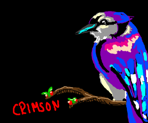 A violet bluejay named Crimson