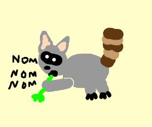 Raccoon nom nom-ing on green celery