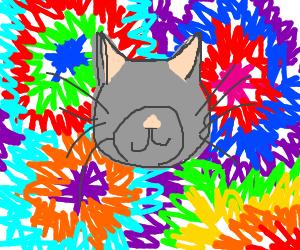 Eyeless cat on drugs