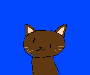 A brown cat with uneven eyes