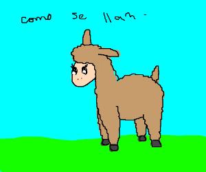 "Flirty female llama asks:  ""Como se llama?"""