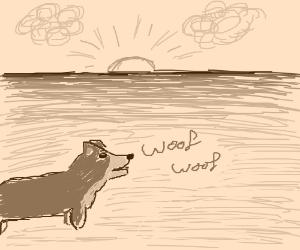 Corgi Gazes Upon the Infinite Horizon