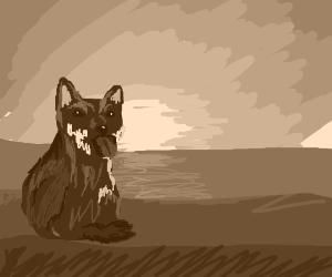 Shiba inu watches sunset