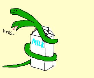 two headed milk snake