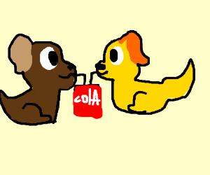 Two dogs enjoying a soda