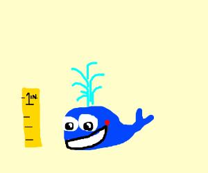 teeny tiny whale is happy