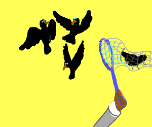 Catching birds with a butterfly net lol
