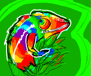 Rainbow lizard enjoying the sun