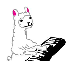 A llama playing piano