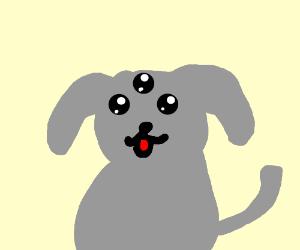 A three eyed grey dog
