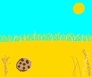 Cookie in a wheat field.