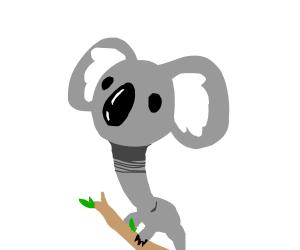 Long-Necked Koala.