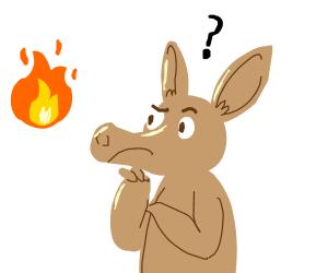 Aardvark contemplates the flames